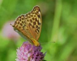 insect at around near Yatsugat...